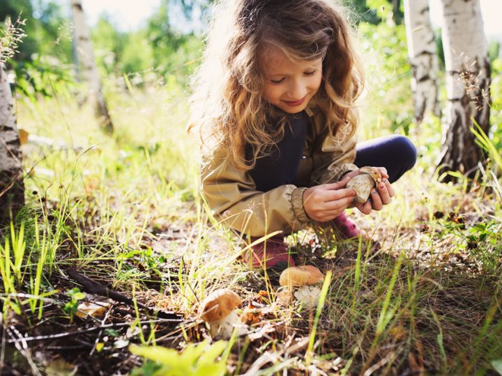 Huby z čarovnej prírody dokážu byť viac než len chutné